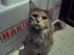 Skeptisk katt er skeptisk